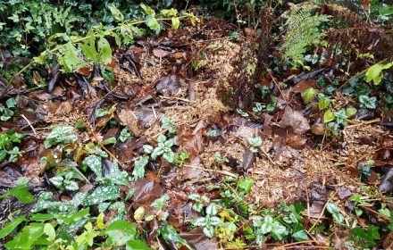 4 dik dekbed van blad en twijgjes